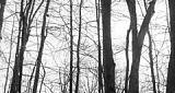 Near Fallen Trees
